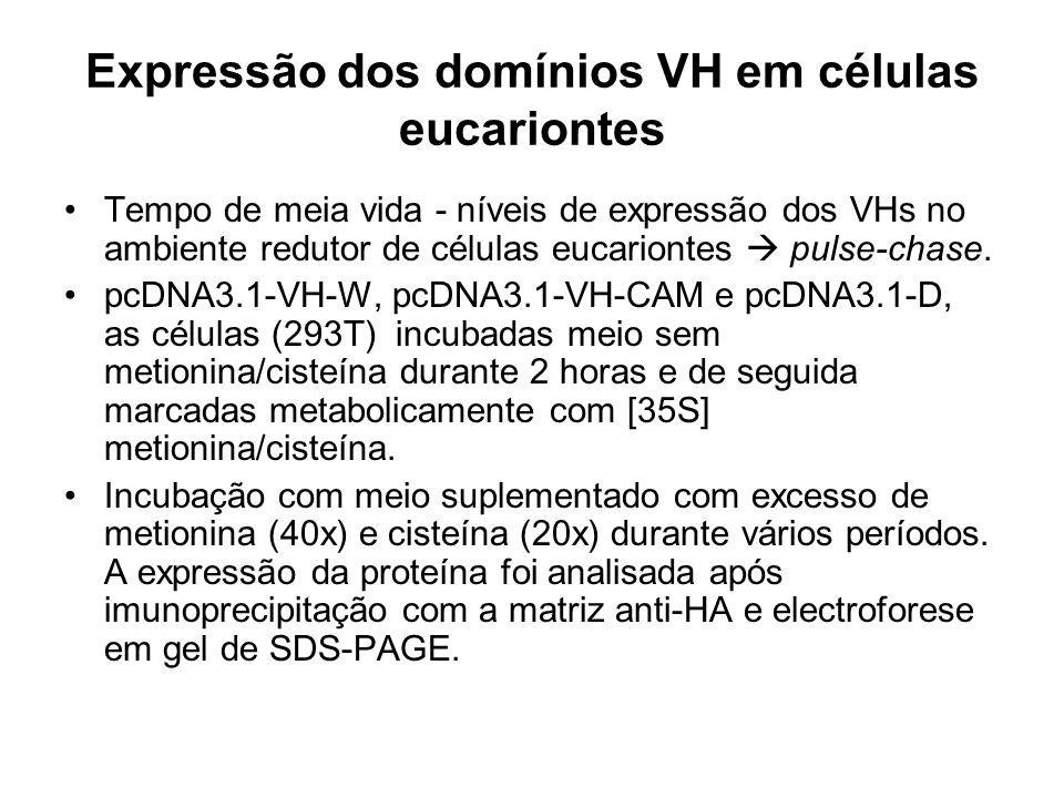 Expressão dos domínios VH em células eucariontes Tempo de meia vida - níveis de expressão dos VHs no ambiente redutor de células eucariontes pulse-chase.