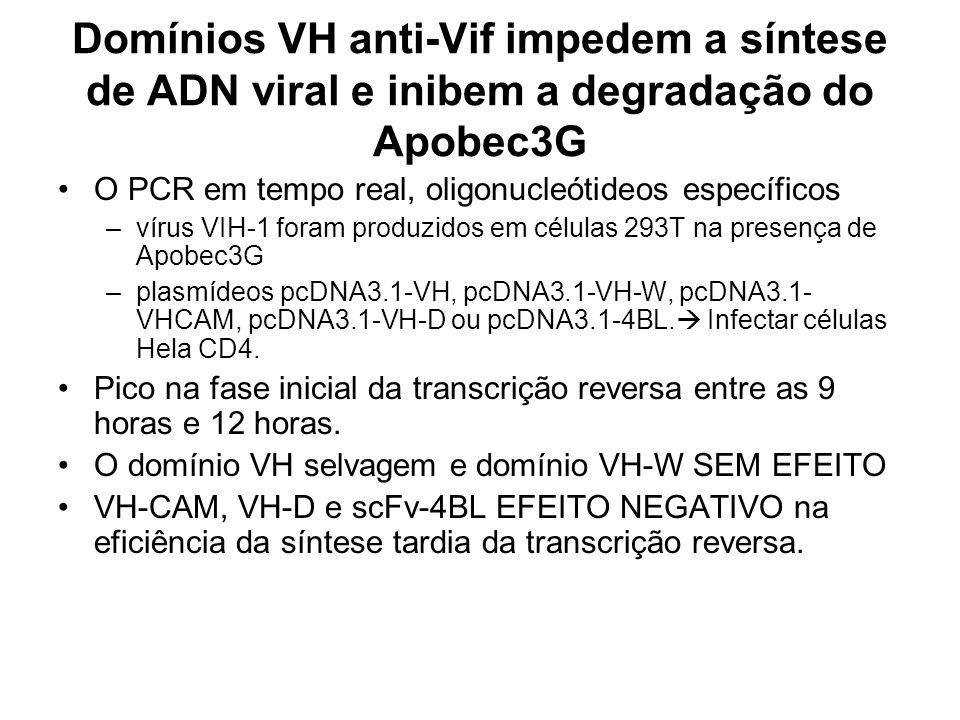 Domínios VH anti-Vif impedem a síntese de ADN viral e inibem a degradação do Apobec3G O PCR em tempo real, oligonucleótideos específicos –vírus VIH-1 foram produzidos em células 293T na presença de Apobec3G –plasmídeos pcDNA3.1-VH, pcDNA3.1-VH-W, pcDNA3.1- VHCAM, pcDNA3.1-VH-D ou pcDNA3.1-4BL.