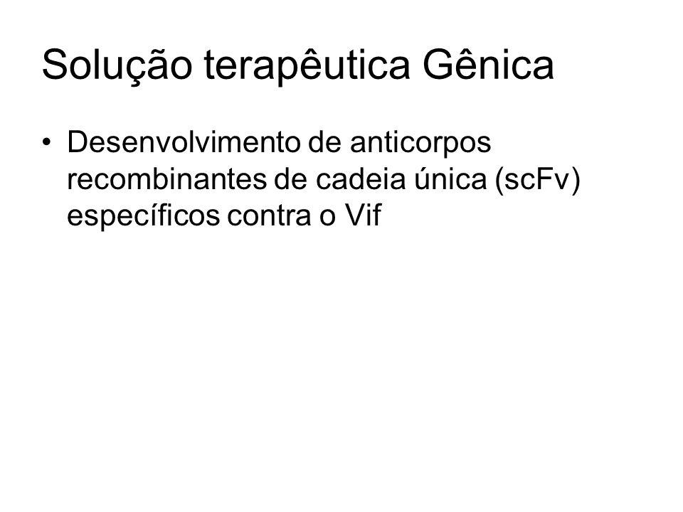 Solução terapêutica Gênica Desenvolvimento de anticorpos recombinantes de cadeia única (scFv) específicos contra o Vif