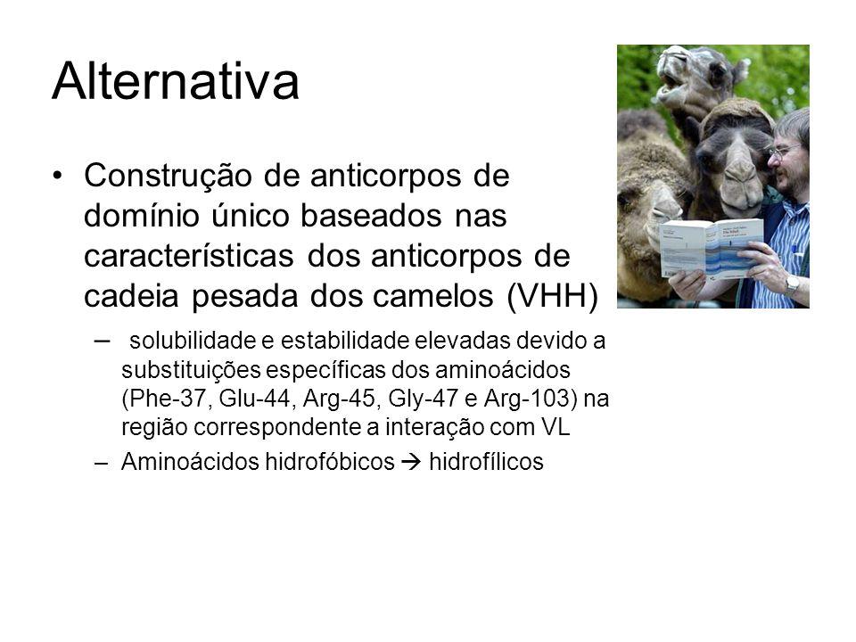Alternativa Construção de anticorpos de domínio único baseados nas características dos anticorpos de cadeia pesada dos camelos (VHH) – solubilidade e