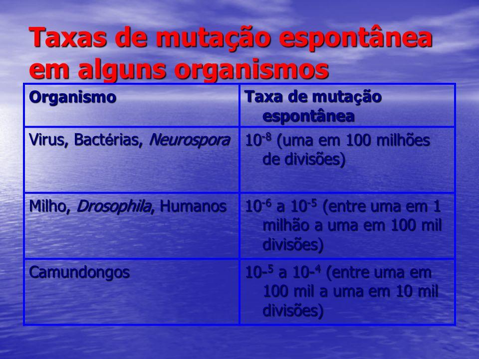 Taxas de mutação espontânea em alguns organismos Organismo Taxa de muta ç ão espontânea Virus, Bact é rias, Neurospora 10 -8 (uma em 100 milhões de di