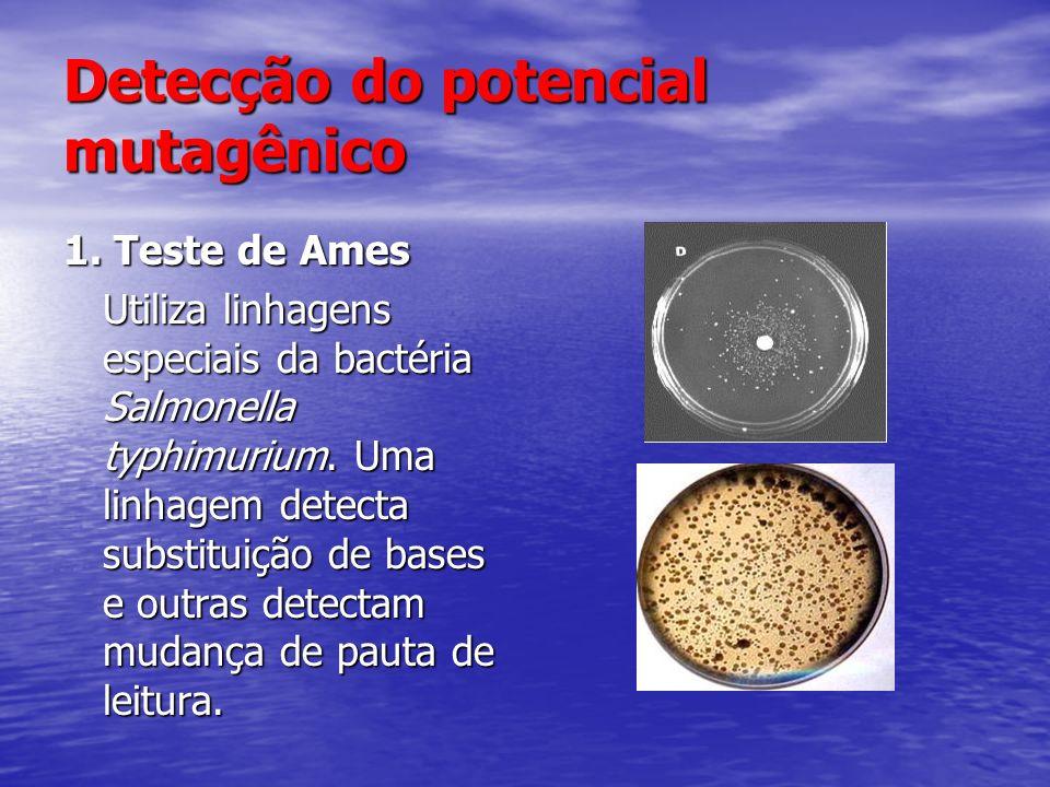 Detecção do potencial mutagênico 1. Teste de Ames Utiliza linhagens especiais da bactéria Salmonella typhimurium. Uma linhagem detecta substituição de