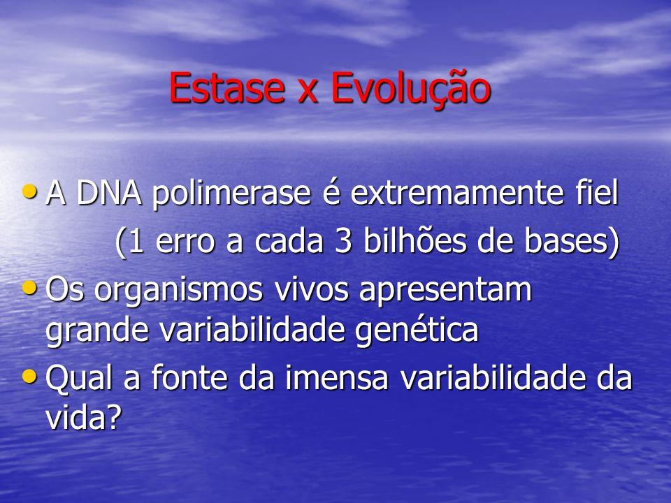 Estase x Evolução A DNA polimerase é extremamente fiel A DNA polimerase é extremamente fiel (1 erro a cada 3 bilhões de bases) (1 erro a cada 3 bilhõe