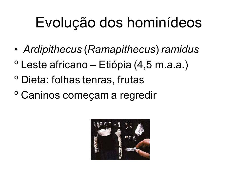 Evolução dos hominídeos Ardipithecus (Ramapithecus) ramidus º Leste africano – Etiópia (4,5 m.a.a.) º Dieta: folhas tenras, frutas º Caninos começam a