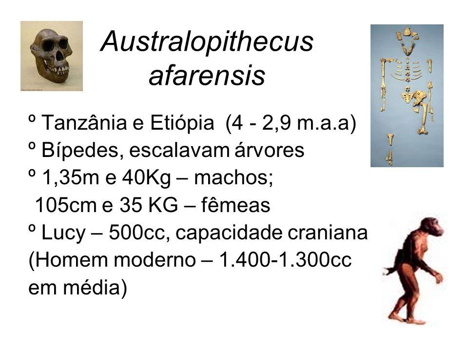 Australopithecus afarensis º Tanzânia e Etiópia (4 - 2,9 m.a.a) º Bípedes, escalavam árvores º 1,35m e 40Kg – machos; 105cm e 35 KG – fêmeas º Lucy –