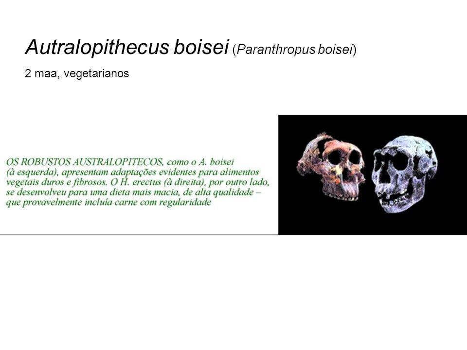 Autralopithecus boisei (Paranthropus boisei) 2 maa, vegetarianos