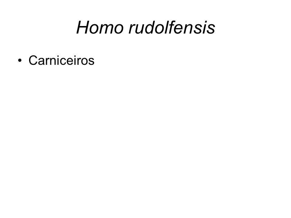 Homo rudolfensis Carniceiros