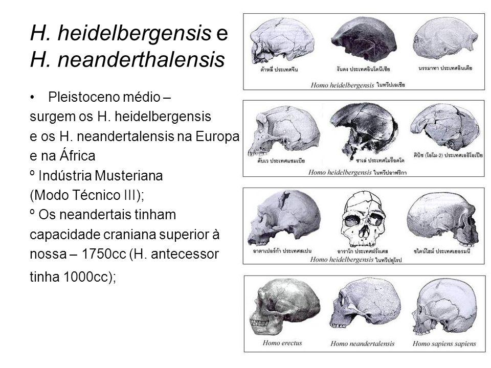 H. heidelbergensis e H. neanderthalensis Pleistoceno médio – surgem os H. heidelbergensis e os H. neandertalensis na Europa e na África º Indústria Mu