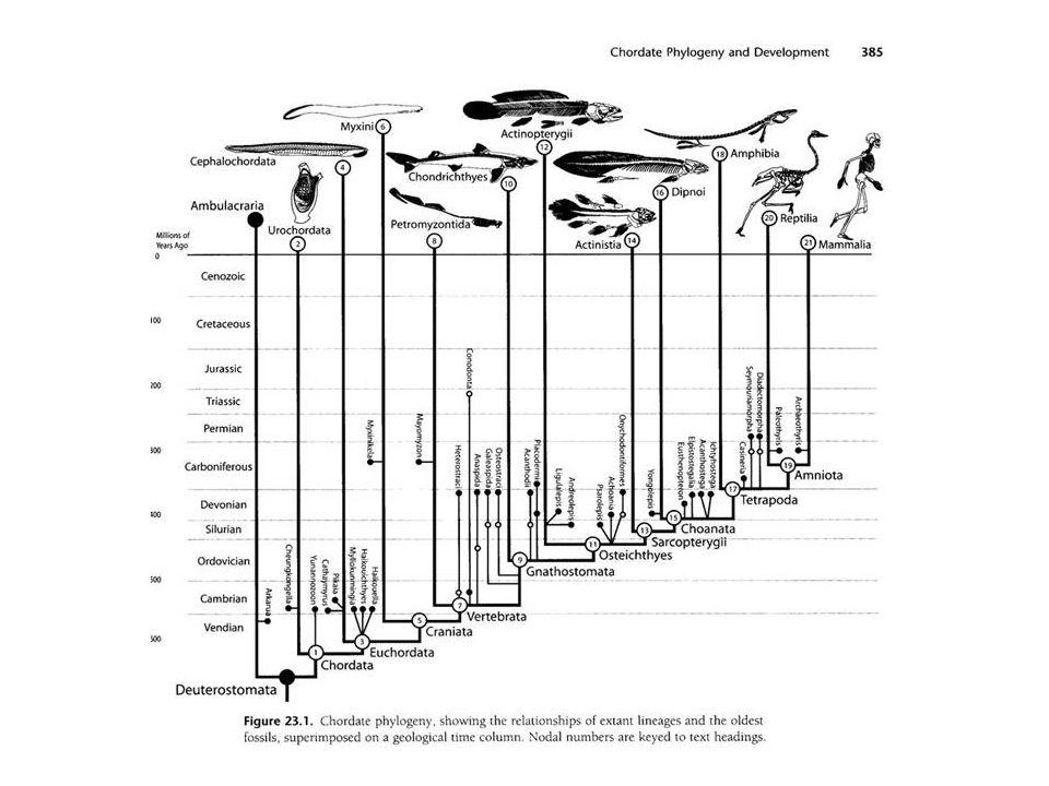 Origem dos mamíferos