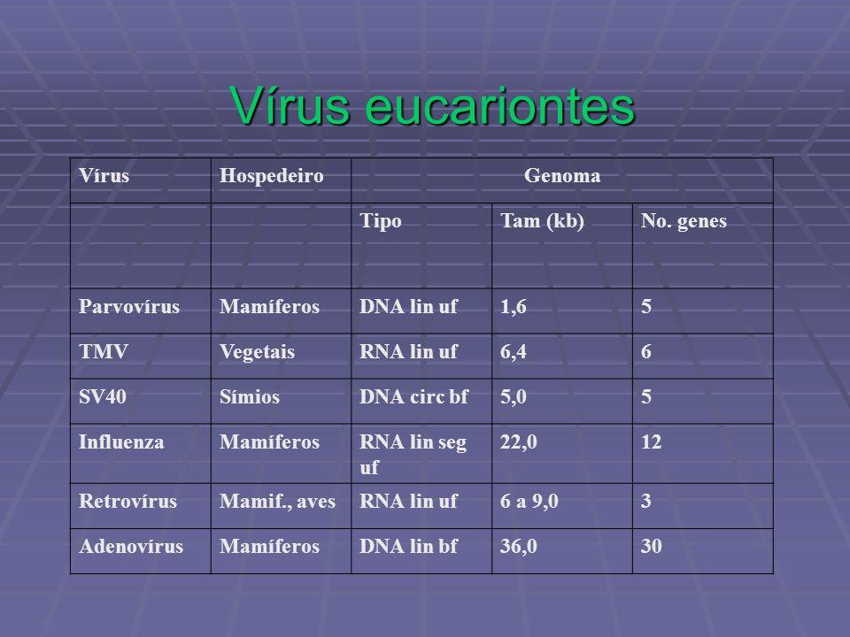 Vírus eucariontes VírusHospedeiroGenoma TipoTam (kb)No. genes ParvovírusMamíferosDNA lin uf1,65 TMVVegetaisRNA lin uf6,46 SV40SímiosDNA circ bf5,05 In