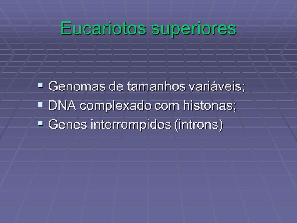 Eucariotos superiores Genomas de tamanhos variáveis; Genomas de tamanhos variáveis; DNA complexado com histonas; DNA complexado com histonas; Genes in