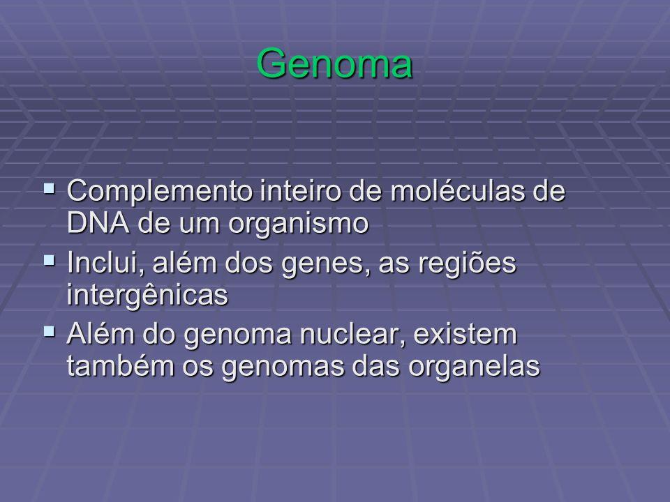 Genoma Complemento inteiro de moléculas de DNA de um organismo Complemento inteiro de moléculas de DNA de um organismo Inclui, além dos genes, as regi