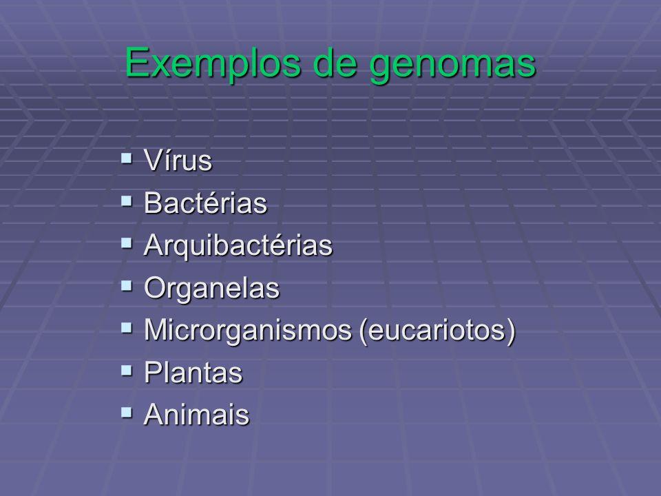 Exemplos de genomas Vírus Vírus Bactérias Bactérias Arquibactérias Arquibactérias Organelas Organelas Microrganismos (eucariotos) Microrganismos (euca