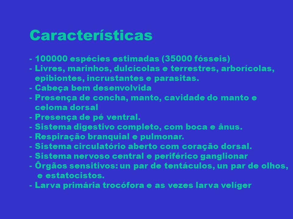 Características - 100000 espécies estimadas (35000 fósseis) - Livres, marinhos, dulcícolas e terrestres, arborícolas, epibiontes, incrustantes e paras