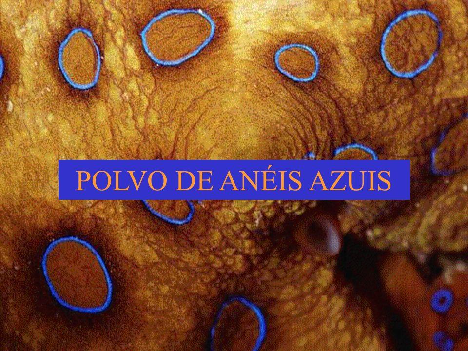 POLVO DE ANÉIS AZUIS