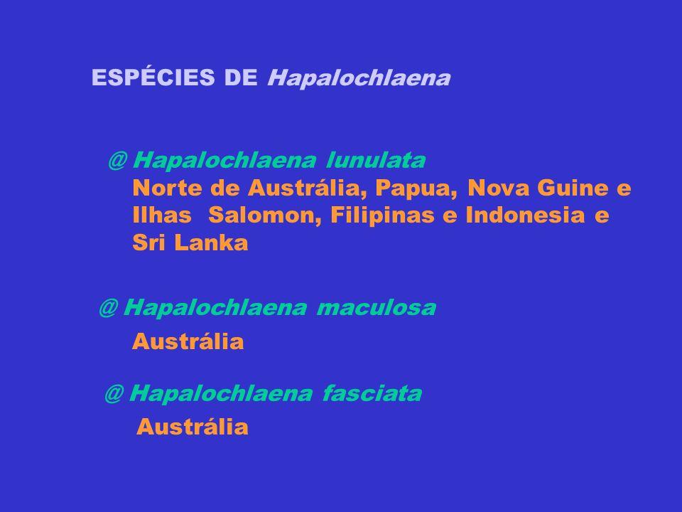 @ Hapalochlaena lunulata ESPÉCIES DE Hapalochlaena Norte de Austrália, Papua, Nova Guine e Ilhas Salomon, Filipinas e Indonesia e Sri Lanka @ Hapaloch