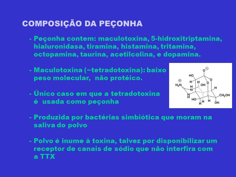 COMPOSIÇÃO DA PEÇONHA - Peçonha contem: maculotoxina, 5-hidroxitriptamina, hialuronidasa, tiramina, histamina, tritamina, octopamina, taurina, acetilc