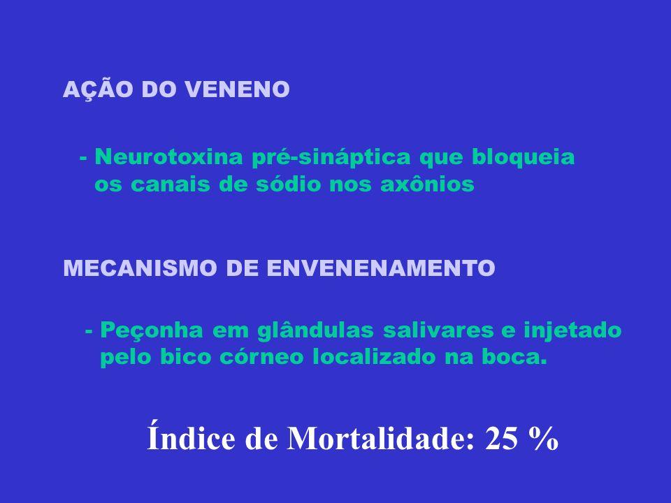 AÇÃO DO VENENO - Neurotoxina pré-sináptica que bloqueia os canais de sódio nos axônios MECANISMO DE ENVENENAMENTO - Peçonha em glândulas salivares e i
