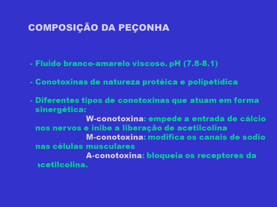 COMPOSIÇÃO DA PEÇONHA - Fluido branco-amarelo viscoso. pH (7.8-8.1) - Conotoxinas de natureza protéica e polipetídica - Diferentes tipos de conotoxina