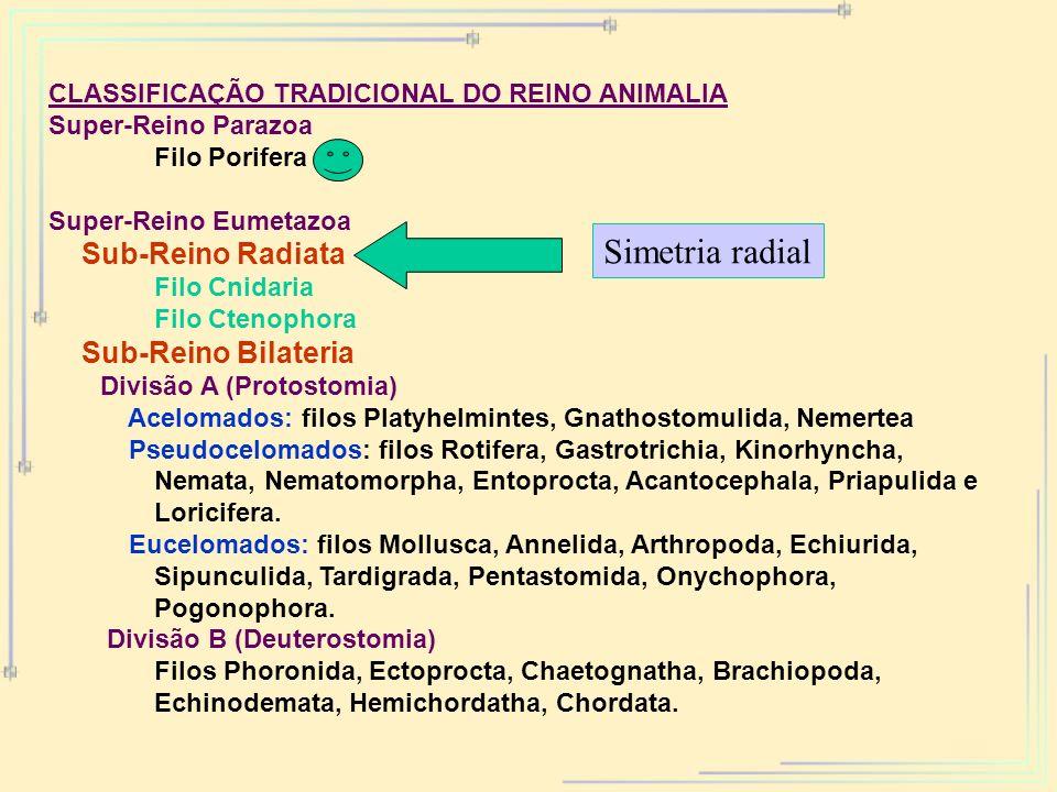 CLASSIFICAÇÃO TRADICIONAL DO REINO ANIMALIA Super-Reino Parazoa Filo Porifera Super-Reino Eumetazoa Sub-Reino Radiata Filo Cnidaria Filo Ctenophora Su