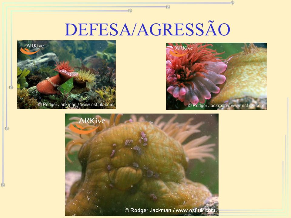 DEFESA/AGRESSÃO