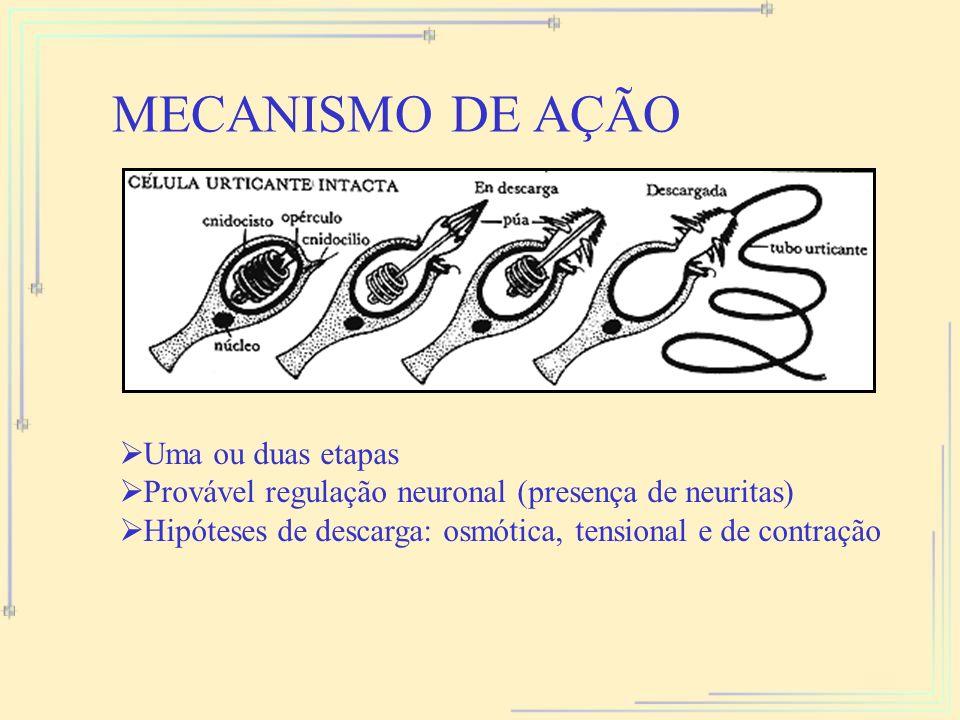 MECANISMO DE AÇÃO Uma ou duas etapas Provável regulação neuronal (presença de neuritas) Hipóteses de descarga: osmótica, tensional e de contração