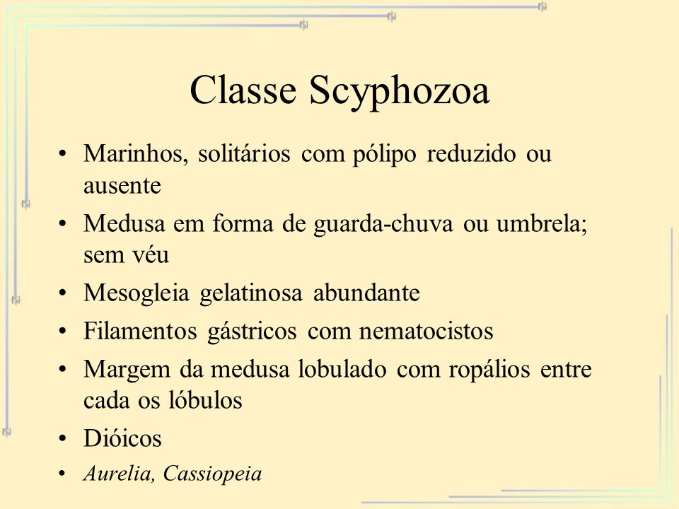 Classe Scyphozoa Marinhos, solitários com pólipo reduzido ou ausente Medusa em forma de guarda-chuva ou umbrela; sem véu Mesogleia gelatinosa abundant