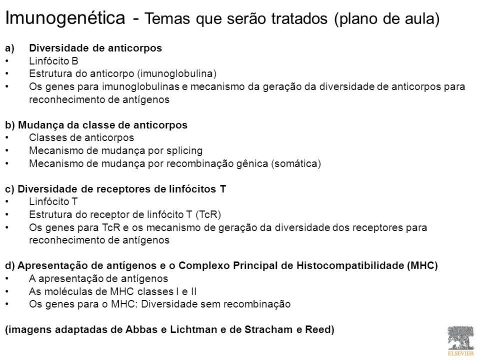Imunogenética - Temas que serão tratados (plano de aula) a)Diversidade de anticorpos Linfócito B Estrutura do anticorpo (imunoglobulina) Os genes para