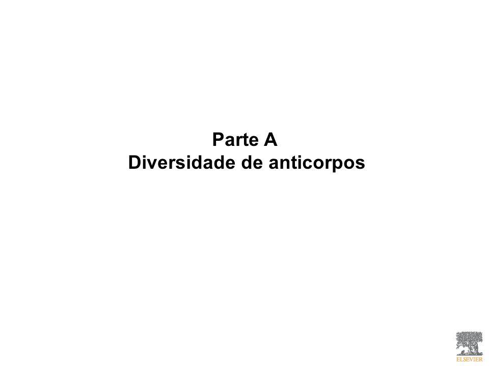 Parte A Diversidade de anticorpos