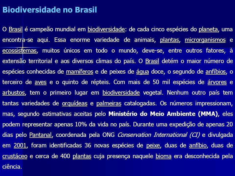 Biodiversidade no Brasil O Brasil é campeão mundial em biodiversidade: de cada cinco espécies do planeta, uma encontra-se aqui. Essa enorme variedade