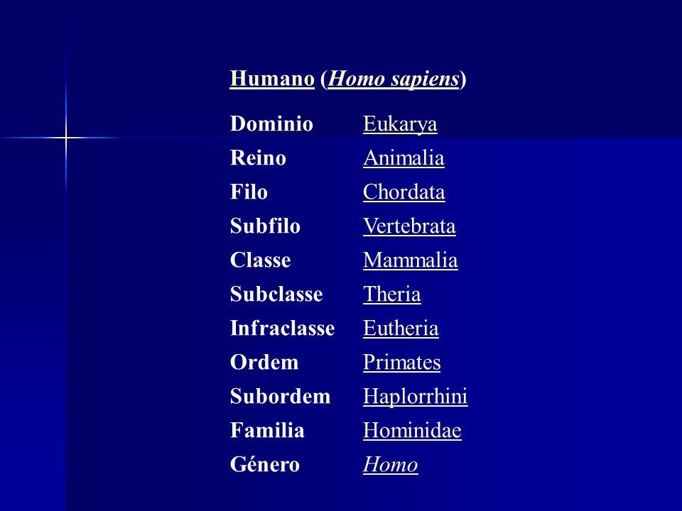 HumanoHumano (Homo sapiens)Homo sapiens DominioEukarya ReinoAnimalia FiloChordata SubfiloVertebrata ClasseMammalia SubclasseTheria InfraclasseEutheria