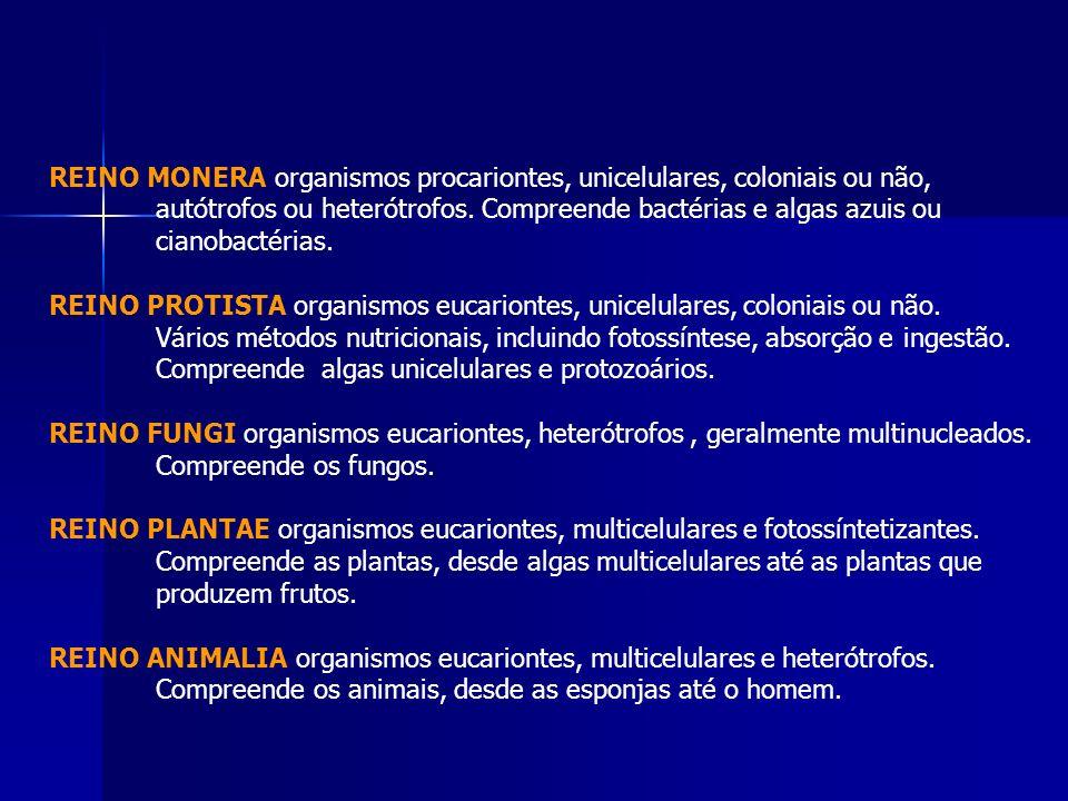 REINO MONERA organismos procariontes, unicelulares, coloniais ou não, autótrofos ou heterótrofos. Compreende bactérias e algas azuis ou cianobactérias
