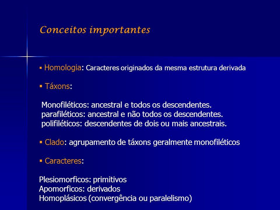 Conceitos importantes Homologia: Caracteres originados da mesma estrutura derivada Táxons: Monofiléticos: ancestral e todos os descendentes. parafilét