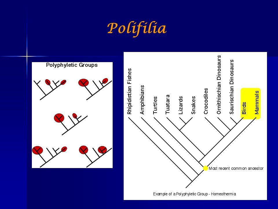 Polifilia
