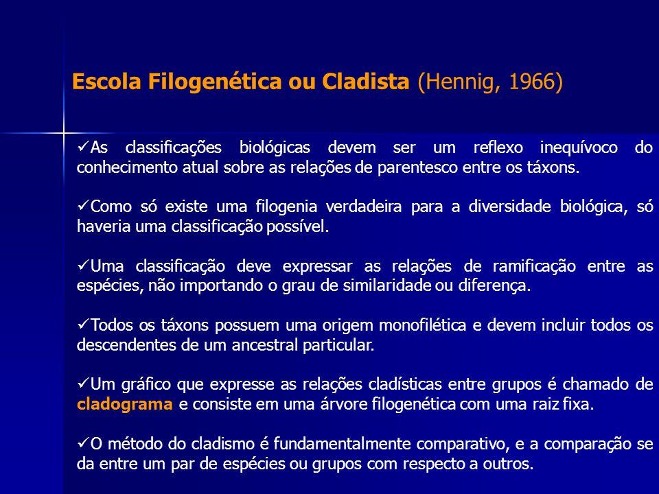 Escola Filogenética ou Cladista (Hennig, 1966) As classificações biológicas devem ser um reflexo inequívoco do conhecimento atual sobre as relações de