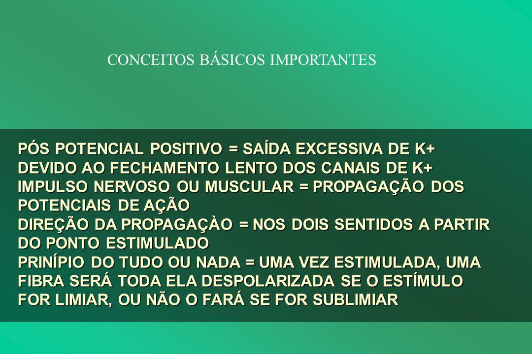 PÓS POTENCIAL POSITIVO = SAÍDA EXCESSIVA DE K+ DEVIDO AO FECHAMENTO LENTO DOS CANAIS DE K+ IMPULSO NERVOSO OU MUSCULAR = PROPAGAÇÃO DOS POTENCIAIS DE AÇÃO DIREÇÃO DA PROPAGAÇÀO = NOS DOIS SENTIDOS A PARTIR DO PONTO ESTIMULADO PRINÍPIO DO TUDO OU NADA = UMA VEZ ESTIMULADA, UMA FIBRA SERÁ TODA ELA DESPOLARIZADA SE O ESTÍMULO FOR LIMIAR, OU NÃO O FARÁ SE FOR SUBLIMIAR CONCEITOS BÁSICOS IMPORTANTES
