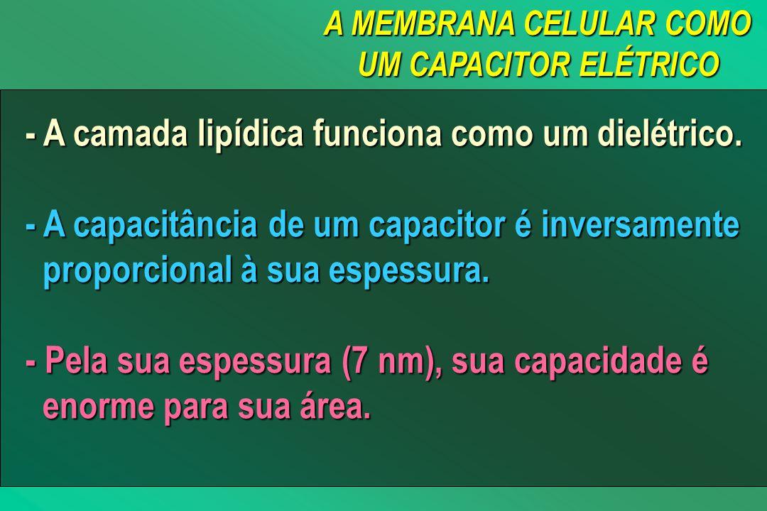 A MEMBRANA CELULAR COMO UM CAPACITOR ELÉTRICO - A camada lipídica funciona como um dielétrico.