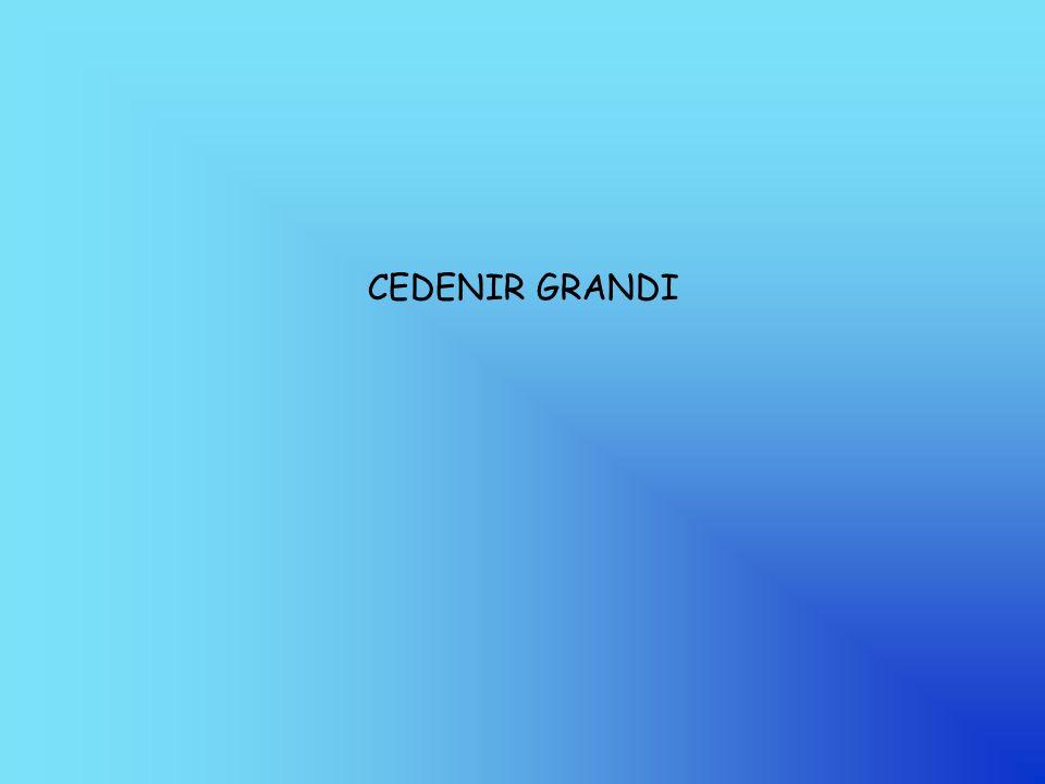 CEDENIR GRANDI