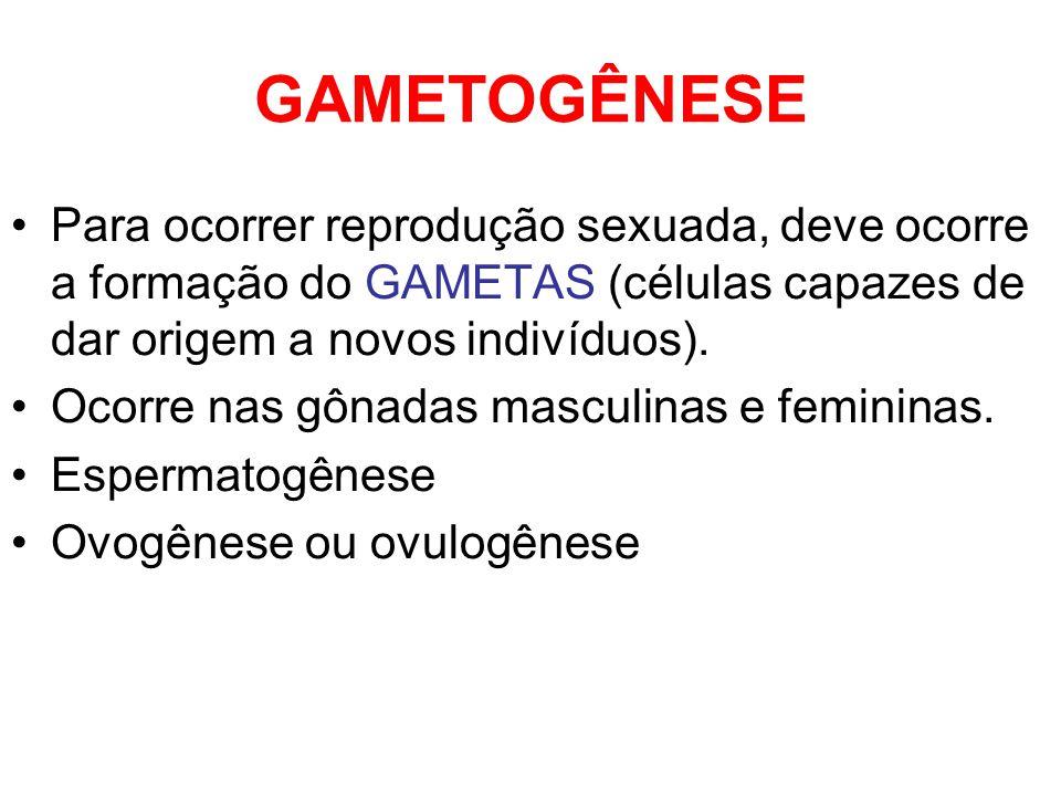 GAMETOGÊNESE Para ocorrer reprodução sexuada, deve ocorre a formação do GAMETAS (células capazes de dar origem a novos indivíduos). Ocorre nas gônadas
