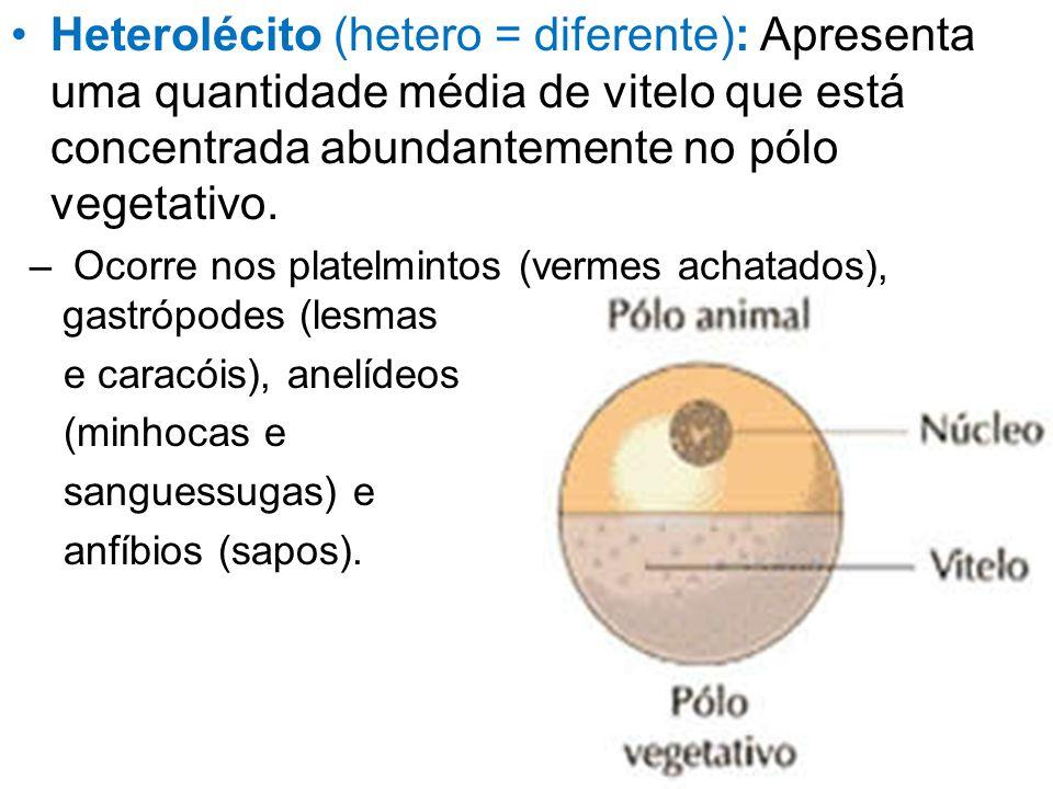 Heterolécito (hetero = diferente): Apresenta uma quantidade média de vitelo que está concentrada abundantemente no pólo vegetativo. – Ocorre nos plate