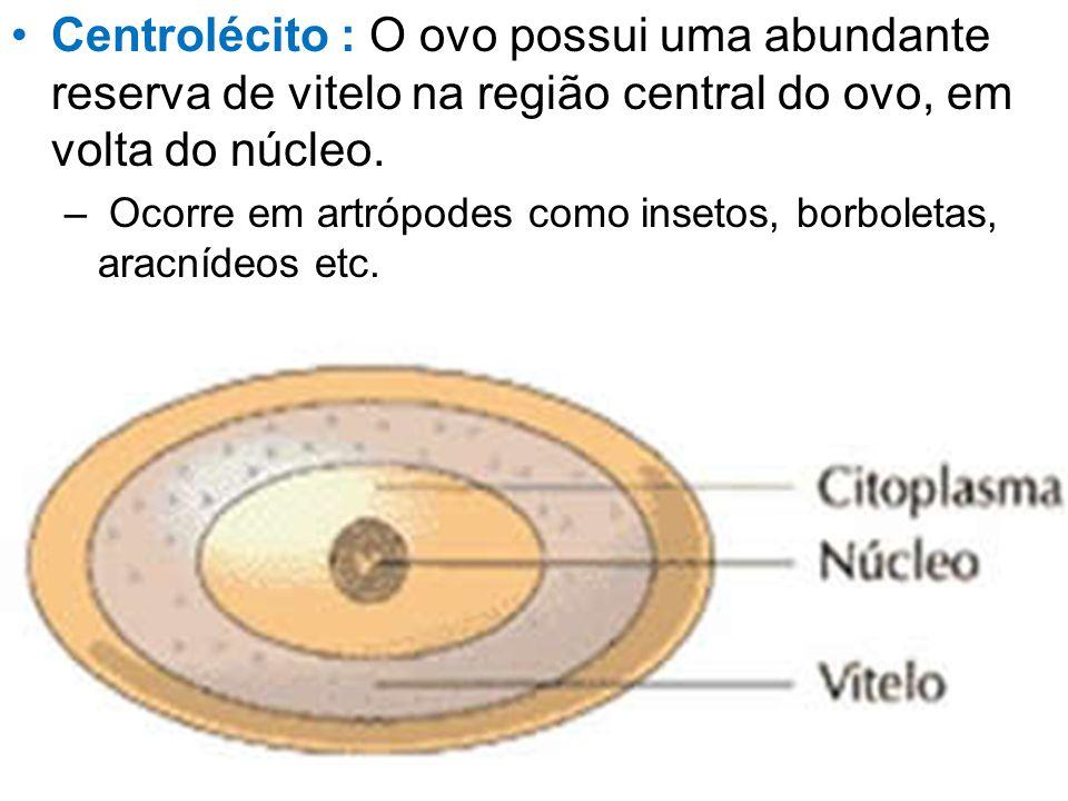 Centrolécito : O ovo possui uma abundante reserva de vitelo na região central do ovo, em volta do núcleo. – Ocorre em artrópodes como insetos, borbole