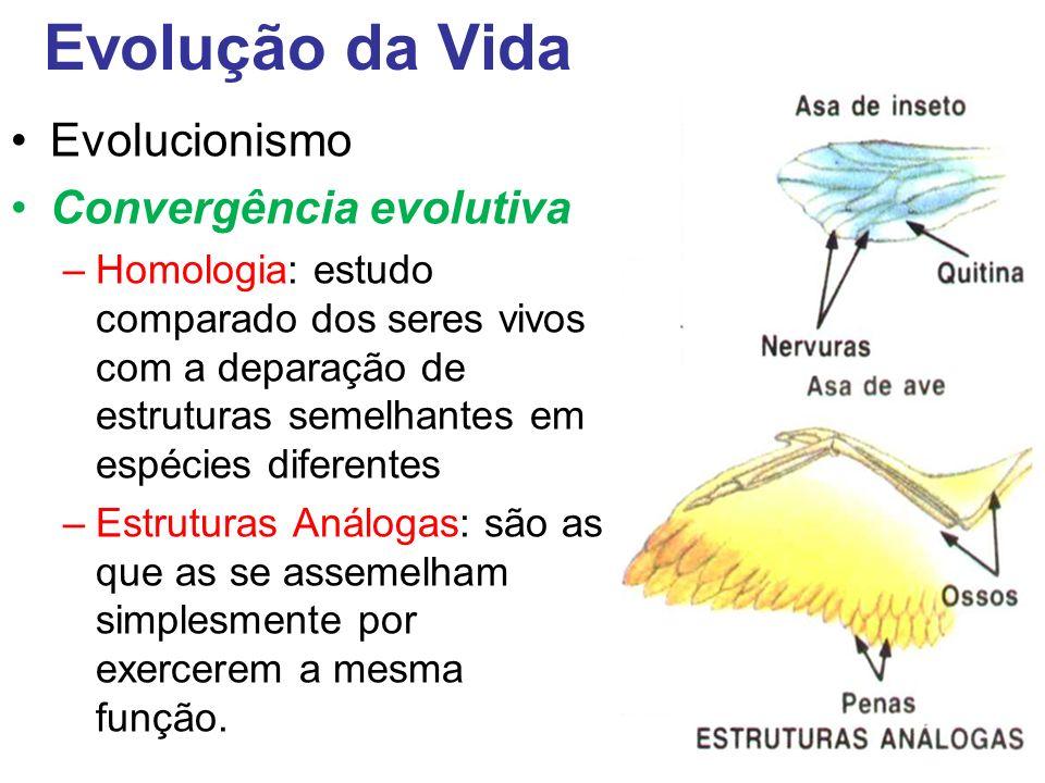 Evolução da Vida Evolucionismo Convergência evolutiva –Homologia: estudo comparado dos seres vivos com a deparação de estruturas semelhantes em espécies diferentes –Estruturas Análogas: são as que as se assemelham simplesmente por exercerem a mesma função.