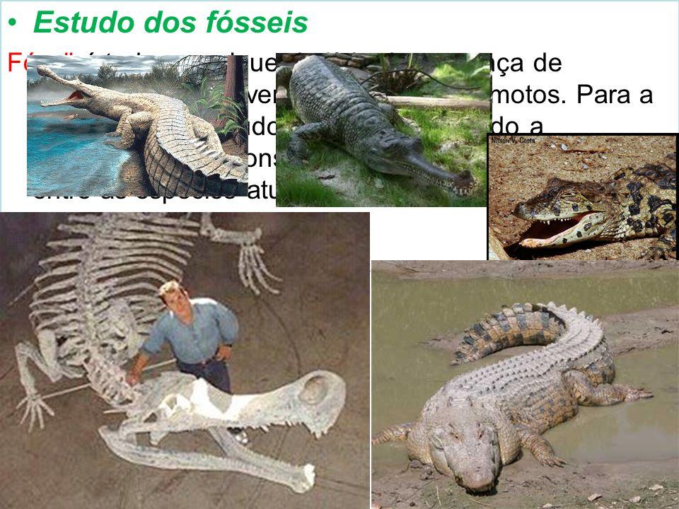 Estudo dos fósseis Fóssil é todo e qualquer indício da presença de organismos que viveram em tempos remotos. Para a evolução, seu estudo é importante