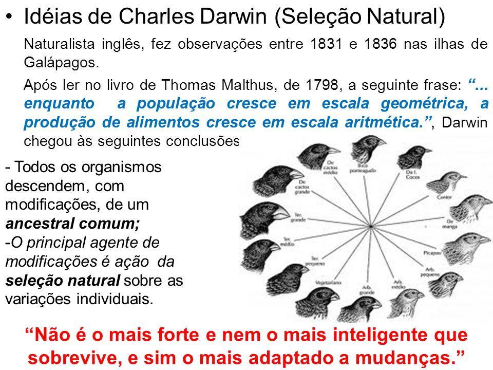 Idéias de Charles Darwin (Seleção Natural) Naturalista inglês, fez observações entre 1831 e 1836 nas ilhas de Galápagos. Após ler no livro de Thomas M