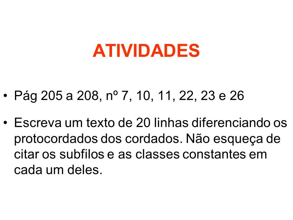 ATIVIDADES Pág 205 a 208, nº 7, 10, 11, 22, 23 e 26 Escreva um texto de 20 linhas diferenciando os protocordados dos cordados. Não esqueça de citar os