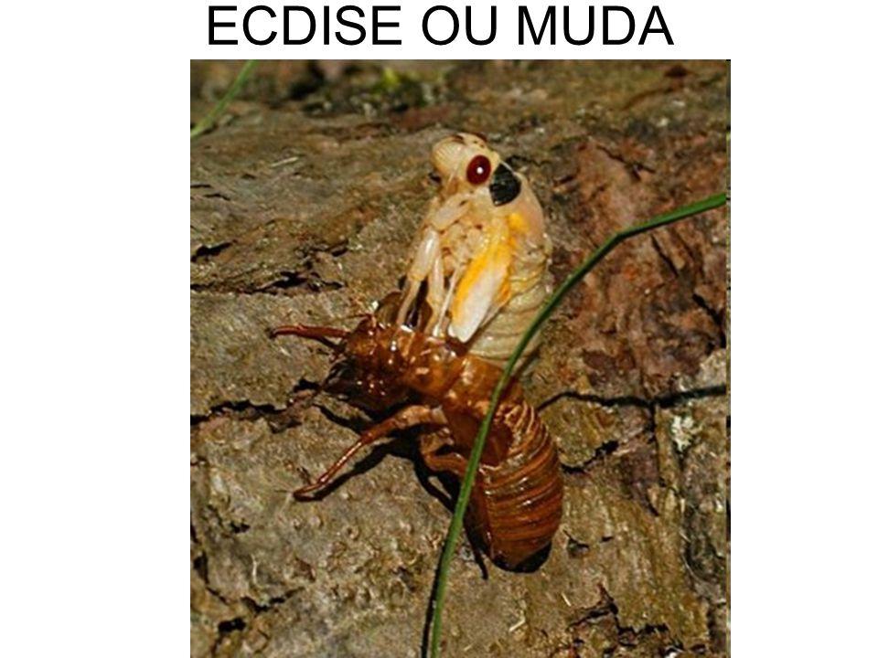ECDISE OU MUDA