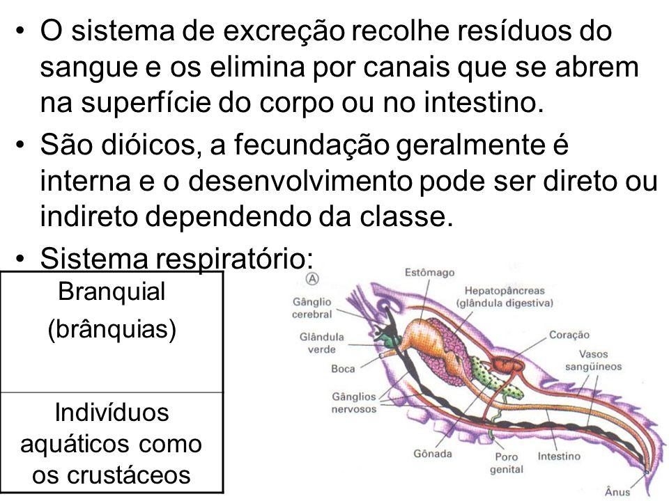 O sistema de excreção recolhe resíduos do sangue e os elimina por canais que se abrem na superfície do corpo ou no intestino. São dióicos, a fecundaçã