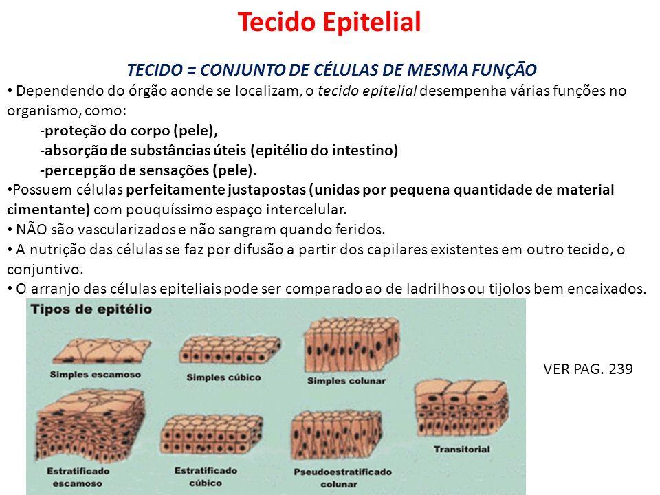 Tecido Epitelial TECIDO = CONJUNTO DE CÉLULAS DE MESMA FUNÇÃO Dependendo do órgão aonde se localizam, o tecido epitelial desempenha várias funções no