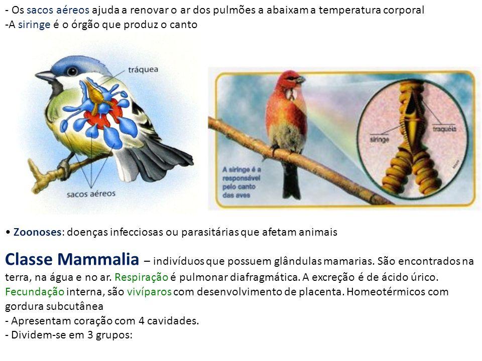 Zoonoses: doenças infecciosas ou parasitárias que afetam animais - Os sacos aéreos ajuda a renovar o ar dos pulmões a abaixam a temperatura corporal -