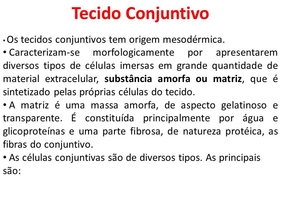 Tecido Conjuntivo Os tecidos conjuntivos tem origem mesodérmica. Caracterizam-se morfologicamente por apresentarem diversos tipos de células imersas e